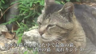 最強野良猫列伝・暴虐の猫、公園に降臨する