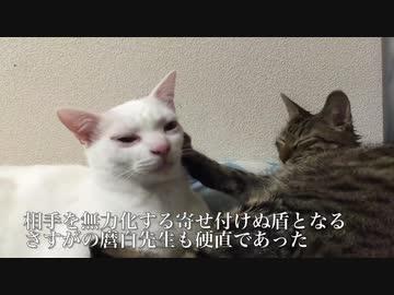 借りたい猫の手、見つかる