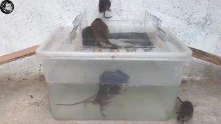 ホモと学ぶネズミトラップ.mp0