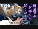 三毛猫と、ちょいドライブ【野良猫の保護まであと6日】