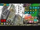 0704【猛禽類ツミの子供のストレッチ】新たなカルガモ親子引っ越し、怪我した野鳥キセキレイ【今日撮り野鳥動画まとめ】身近な生き物語