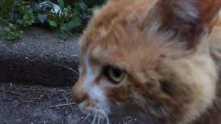 古参ボス猫、晩年にその地位を若猫に継承