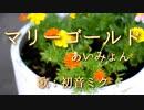 【初音ミク】マリーゴールド/あいみょん【カバー】