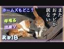 引き取ろうとしていた猫を探していたら〇〇していた【野良猫の保護まであと1日】