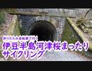 【ミニベロ】伊豆半島河津桜まったりサイクリング【ポタリング】