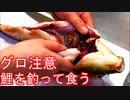 ぴ汚水の鯉を釣って食べたら〇〇だった!※この動画には残酷なシーンが含まれています