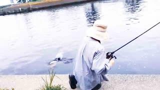 【釣り・ニコ生】荒川の笹目橋&荒川温排水(荒川温泉)で謎の怪魚と鯉をばらす、没レヴェルのVLOG【P30 Pro VOG-L09】