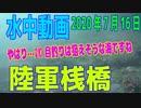 水中動画(2020年7月16日)in 陸軍桟橋