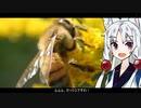 【セイヨウミツバチ】動物たちの性事情【VOICEROID解説】