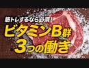 【トレーニー必須】ビタミンB群の3つの働き【ビーレジェンド プロテイン】