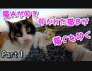 可愛い三毛子の野良猫事情【三毛猫が保護されるまで Part1】