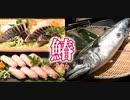 【握ってみた】寿司職人が作る旬のサワラのタタキと握り寿司!