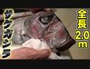 【握ってみた】世界初?寿司職人がリュウグウノツカイみたいな巨大魚の握り寿司に挑戦