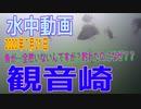 水中動画(2020年7月21日)in 観音崎