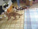 子猫拾いました。08'その5 初対面・後編