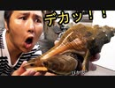 バカデカイ巻貝を調理したら中身も想像を超えていた!