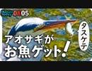 0805【アオサギの捕食】カルガモ親子奇形組。子ガモVS亀。マガモ捕食。カマキリ捕食【今日撮り野鳥動画まとめ】身近な生き物語