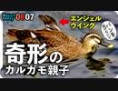 0807【カルガモ親子の悲劇】エンジェルウイング奇形・怪我・置き去り・迷子・・・野鳥にパンをあげないで【今日撮り野鳥動画まとめ】身近な生き物語