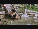 上海動物園、パンダ「和風」のために誕生日パーティー