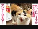 第92位:ちっこいオス三毛猫、甘える為に産まれてきました
