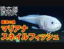 【かわいい】最深8178mの水圧に耐える純白の頂点捕食者【深世...