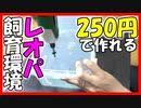 【誰でも作れる!】レオパの飼育環境を250円で作ってみた【5号ベビーちゃんお引越し】