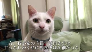 甘ったれ猫たち、甘え鳴きの競演をする