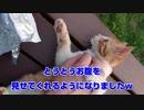 ウォーキングと野良猫とご飯と【part4】
