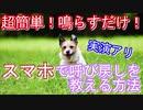 【超簡単】スマホで呼び戻し!鳴らすだけで犬が来てくれる教え方