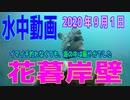 水中動画(2020年9月1日)in 花暮岸壁