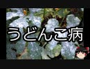 【ゆっくり朗読】ゆっくりさんと不思議な病気 その229