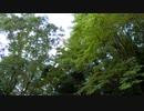 9月の蝉の鳴き声【作業用BGM】