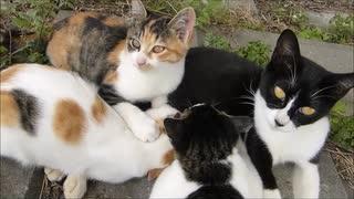 野良母猫が自慢の子猫達を次々に紹介して