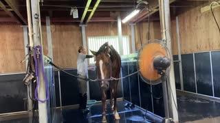 引退競走馬の【Vlog】part17