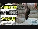 【閲覧注意】ネズミ駆除・生きたネズミのガス処置・ネズミ捕り