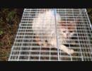 野良gato捕獲その2.mp4