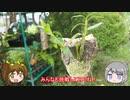 【ゆるふわ植物日記#8】セッコクのコルク着けにチャレンジ!【植物解説】