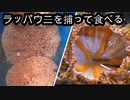 【ぴ】神経毒をもつ毒ウニ!ラッパウニを食べてみた!毒ウニBBQ