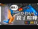 0923【カワセミ親子で縄張り争い】カルガモ喧嘩、コガモにモズにオナガ、カワラバト水浴び【今日撮り野鳥動画まとめ】 #身近な生き物語