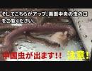 ホモと学ぶ中国虫はシーチキンを食べるのか