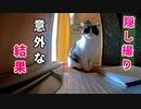 隣の部屋で掃除機を掛けた結果・・・○○する【三毛猫と茶白猫の行動はいかに】