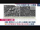 """日本発の「プラスチックを食べる酵素」6倍""""早食い""""に リサイクルへの応用に期待"""