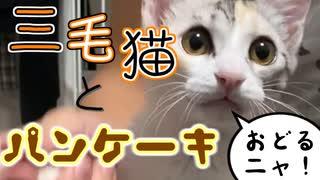三毛猫とパンケーキ【黒猫とパンケーキ】
