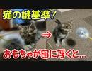 Cat Chocolat 子猫の謎基準