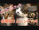 パンケーキアート〜保護猫さん達そして飾れるパンケーキとは…