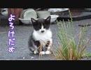 子猫の何気ない日常を撮っていると【野良猫】