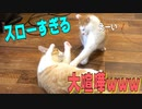 第12位:猫の喧嘩が超スローすぎてめちゃくちゃ可愛かったwww