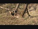 令和最初の狩猟生活(その140)