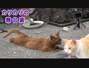 変な体勢で子猫を見守っていた母【その理由は分からない】