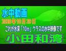 水中動画(2020年10月29日)in 小田和湾